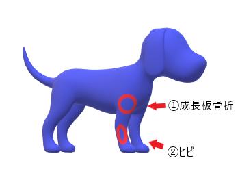 犬の骨折部位の画像